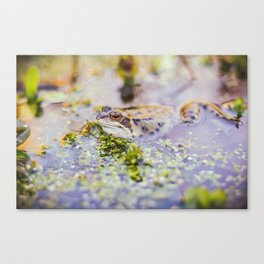 Young Frog Canvas Print