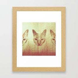 Forest Cat Framed Art Print