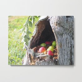 Hidden Apples Metal Print