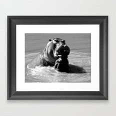Warring hippos Framed Art Print