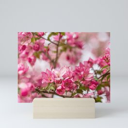 Bright Pink Crabapple Blossoms Mini Art Print