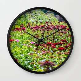 The Lost Gardens of Heligan - Sweet Williams in The Walled garden Wall Clock