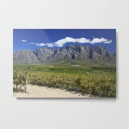 Vineyards in South-Africa Metal Print
