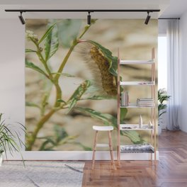 Buff Ermine Moth Caterpillar Wall Mural