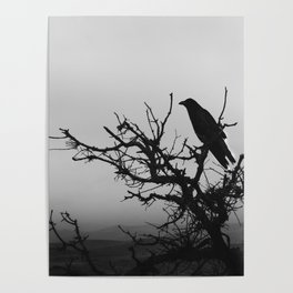 A Raven in Fog Poster