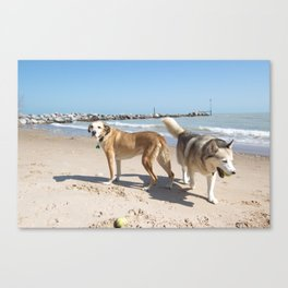 helens dogs  Canvas Print
