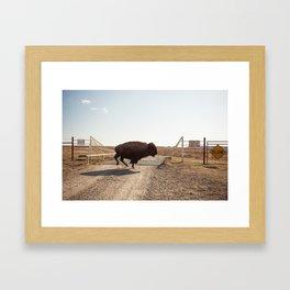 Slow  Framed Art Print