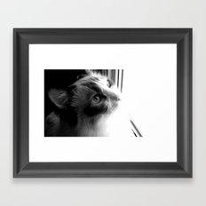 Ragdoll cat at the window. Framed Art Print