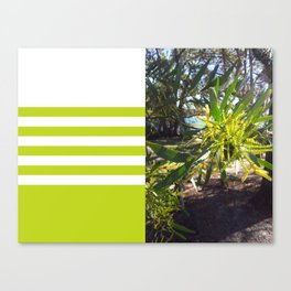 Wattle I do in Vincentia Canvas Print