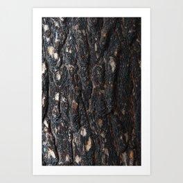 Pine bark after fire. Art Print