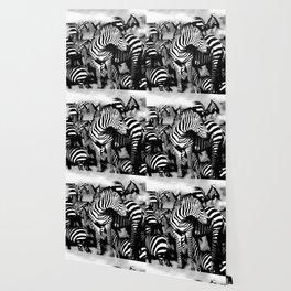 ZEBRA: GO YOUR OWN WAY Wallpaper
