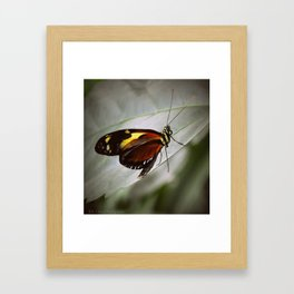 Butterfly #4 Framed Art Print