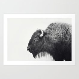 Buffalo Photograph in Black and White Art Print
