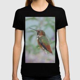 Allen's Hummingbird Sentinel T-shirt