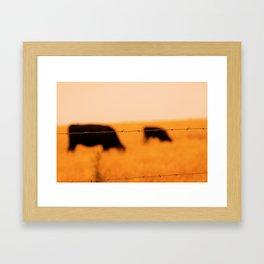 Pt. Reyes Cows Framed Art Print
