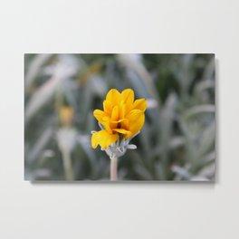 Yellow Flower Close-Up Photo Metal Print