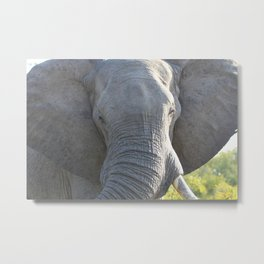 Elephant Up Close and Personal Metal Print