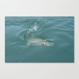 Alaskan Salmon on the line Canvas Print