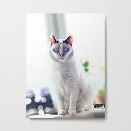 The Magic Cat Metal Print