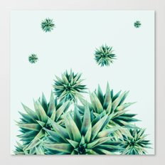 tropical stars  Canvas Print