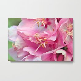 Pink Symphony Floral  of Hope by Reay of Light Photography Metal Print