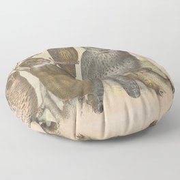 Naturalist Owls Floor Pillow