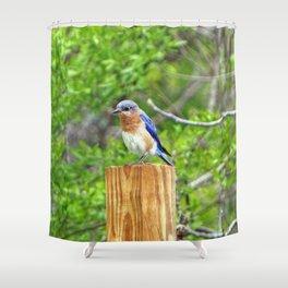 Bluebird on a Fence Post Shower Curtain