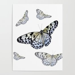 DESIGN OF FLUTTERING BLACK & WHITE BUTTERFLIES  ART Poster
