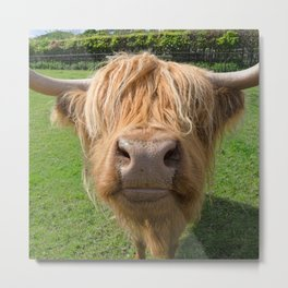Highland cow nose Metal Print
