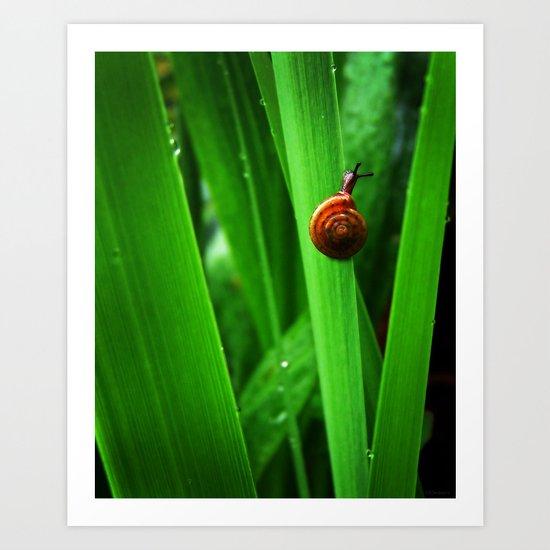 Daring Snail Art Print