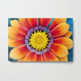 Flower with multiple colors Metal Print