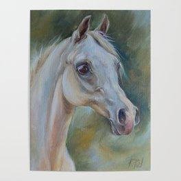 Gray Arabian Horse portrait Arab Horse head oil painting Poster