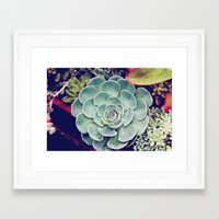 succulent Framed Art Prints featuring Succulent by Holli Dunn Photography
