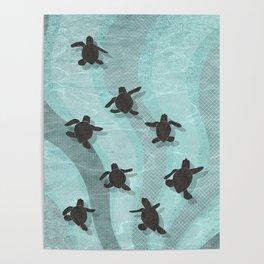 Loggerhead sea turtle hatchlings Poster