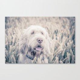 Pure White Barley Canvas Print