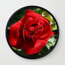 Beautiful Climbing Red Rose Close Up Photograph Wall Clock