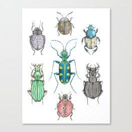 Beete group Canvas Print
