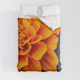 Marry Me Gold and Navy Marigold Comforters