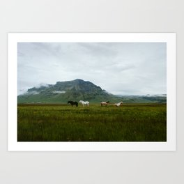 Icelandic Horses Posing for a Photo Art Print