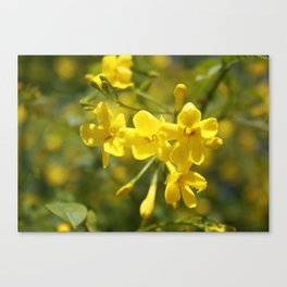 Fragrant Yellow Flowers Of Carolina Jasmine Canvas Print