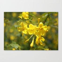 Fragrant Yellow Flowers Of Carolina Jasmine Canvas Print