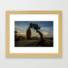 Juniper Tree in Joshua Tree National Park Framed Art Print