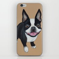boston terrier iPhone & iPod Skins featuring Boston Terrier by PaperTigress