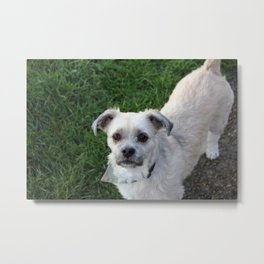 Fudge Metal Print