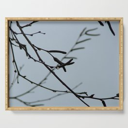 Birch branches on a rainy day Serving Tray