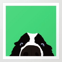 Begging Border Collie Art Print