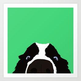 Begging Border Collie Art Print