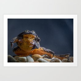 Romeo, the world's loneliest frog (no longer!) Art Print