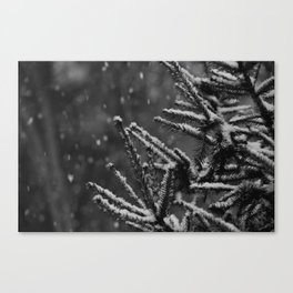 The Evergreen with Snow (Black and White) Canvas Print