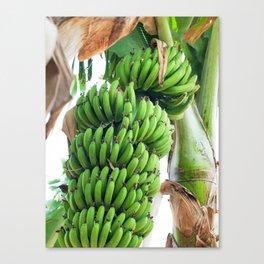 banana paradise Canvas Print